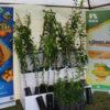 la 17 éme édition de la foire des Agrume à TIPAZA
