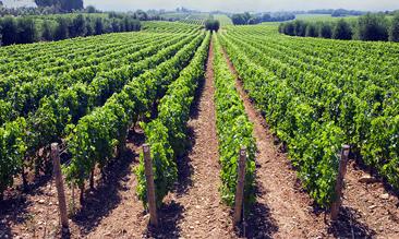 la Protection phytosanitaire et Nutrition de la Vigne